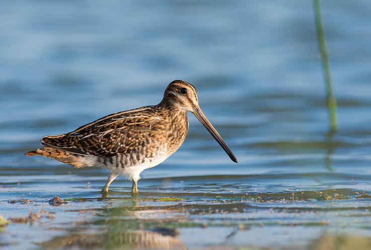 Snipe and Rails