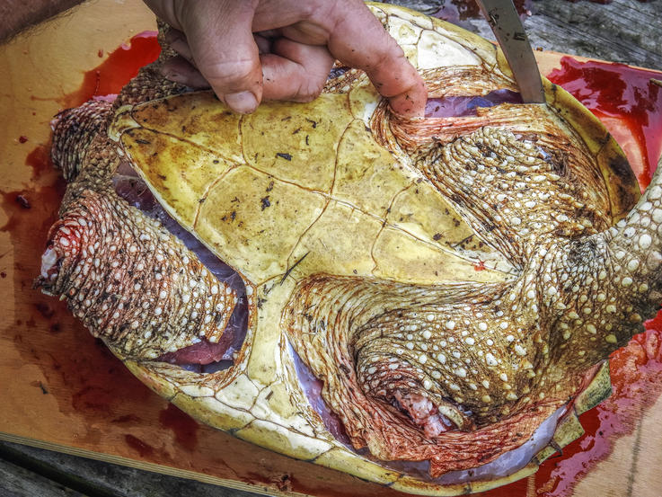 Slice through the skin where it attaches to the shell around each leg