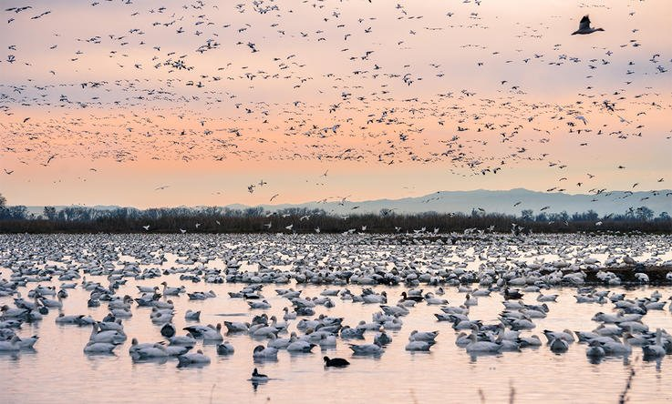 A Flock Lands, Pulling Everything Away