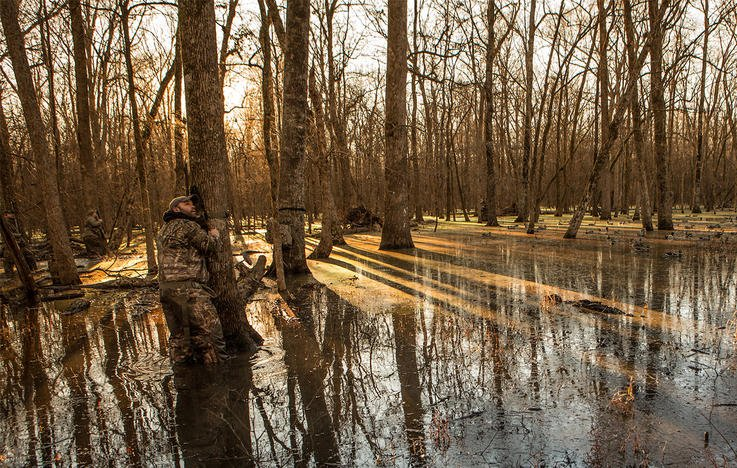 Wood Duck Hunting Dos And Don Ts Waterfowl Hunting Realtree Camo