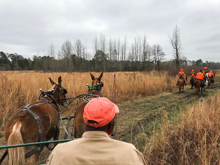 Mule Wagon and Horses