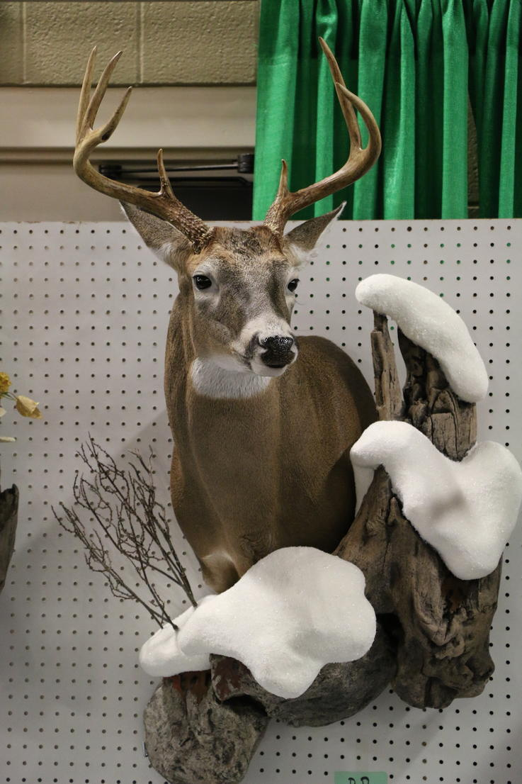 7-Point Buck in the Snow
