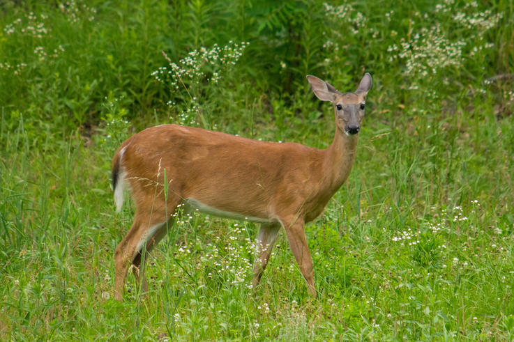 Food Sources for All Deer