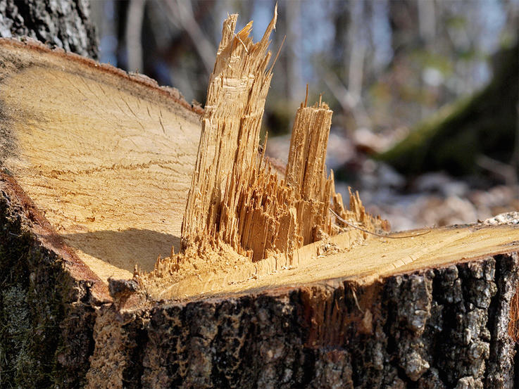 Selectively Cutting Timber