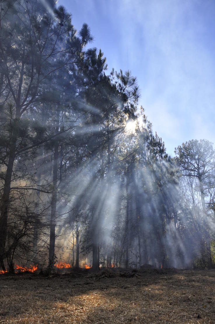 Prescribed Fire and Thinning Set the Table