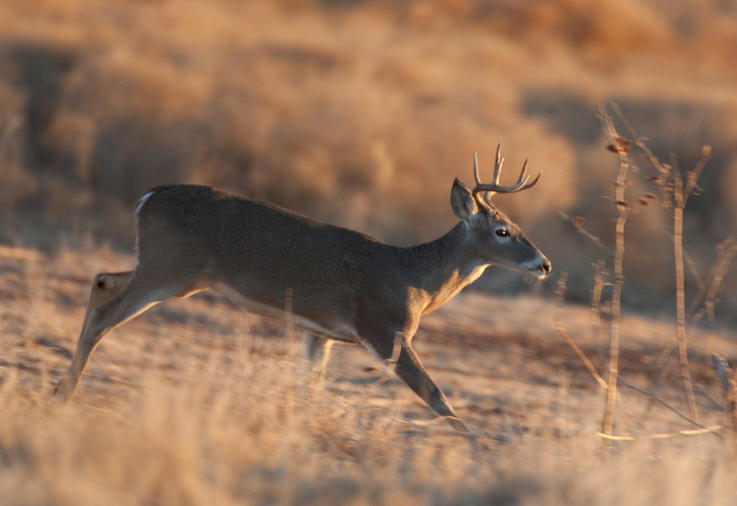 Wounded Deer Always Run Downhill