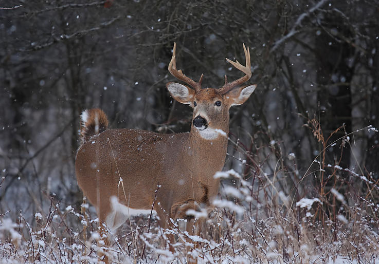 Myth: Hunting Harder Will Put More Deer in the Freezer