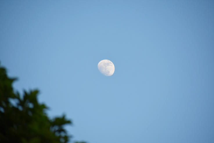 Myth: Moon Phases Play a Big Role in Deer Movement