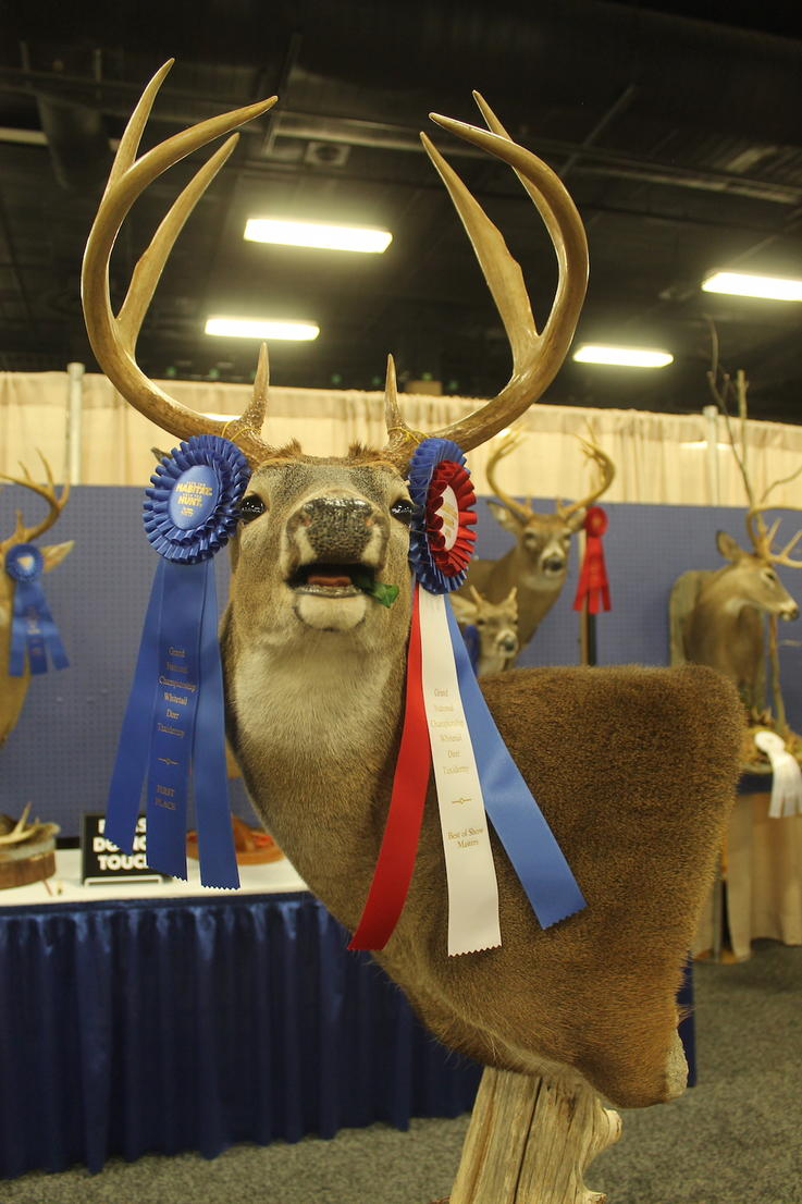 Masters Category Best in Show