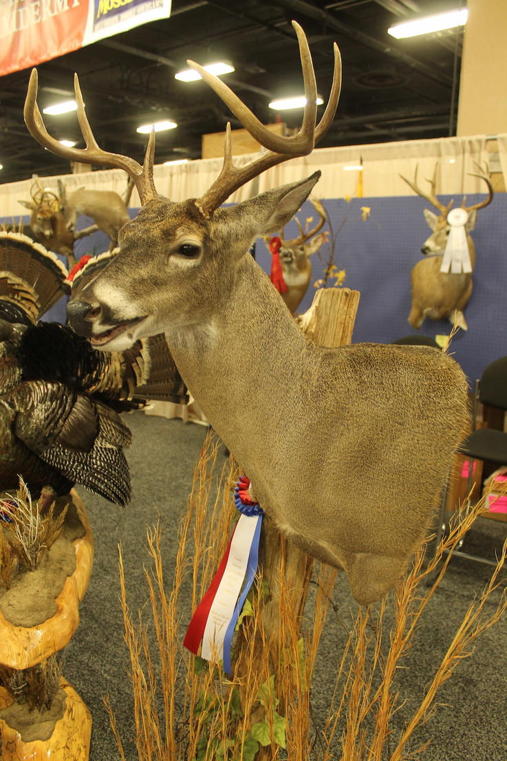 Master of Masters Open-Mouth Deer