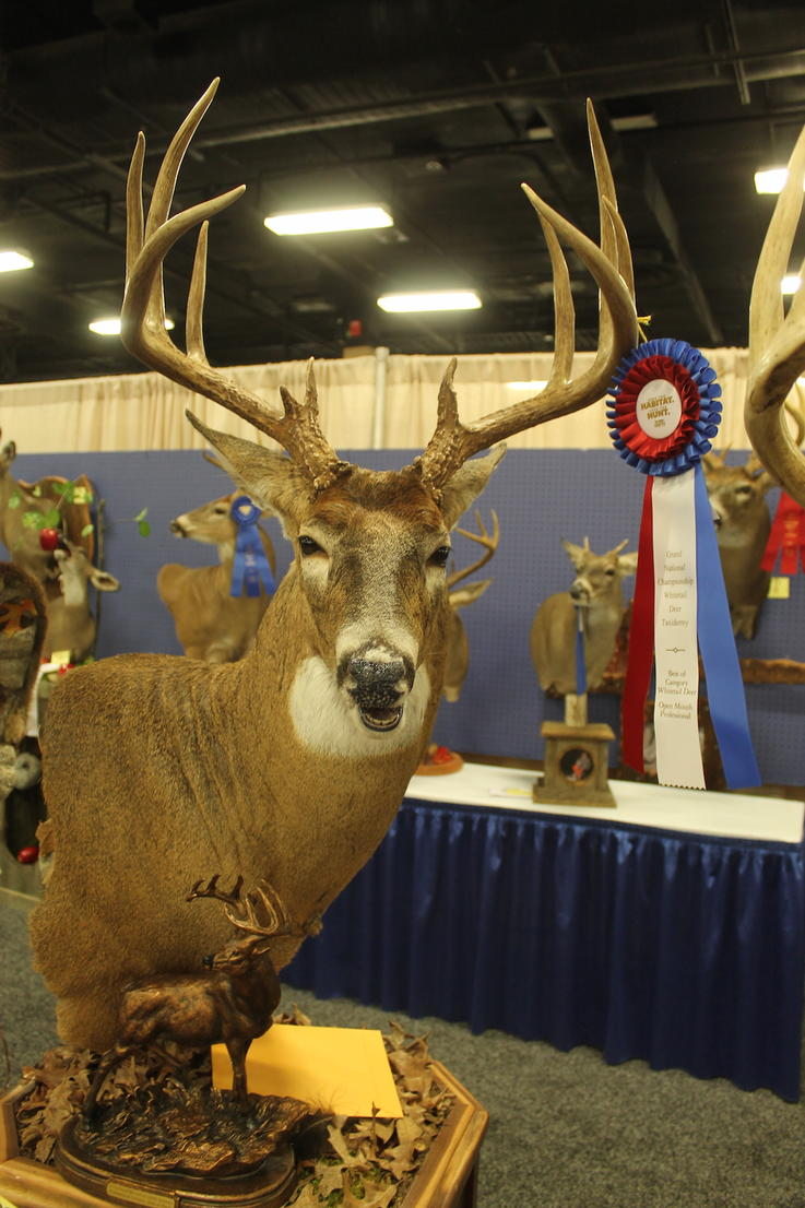 Professional Category Best in Show
