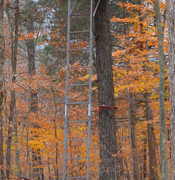 Treestand Maintenance