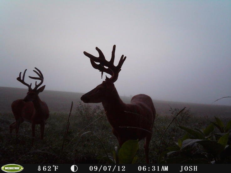 Study Trail Camera Photos from the Past Year