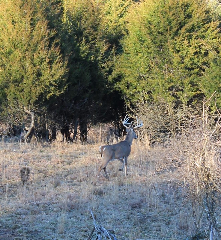 The Moon Does Not Dictate Breeding in White-Tailed Deer