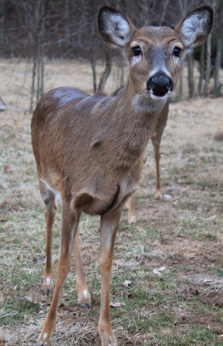 The Biggest Doe Is Not Always the Oldest Doe in the Group