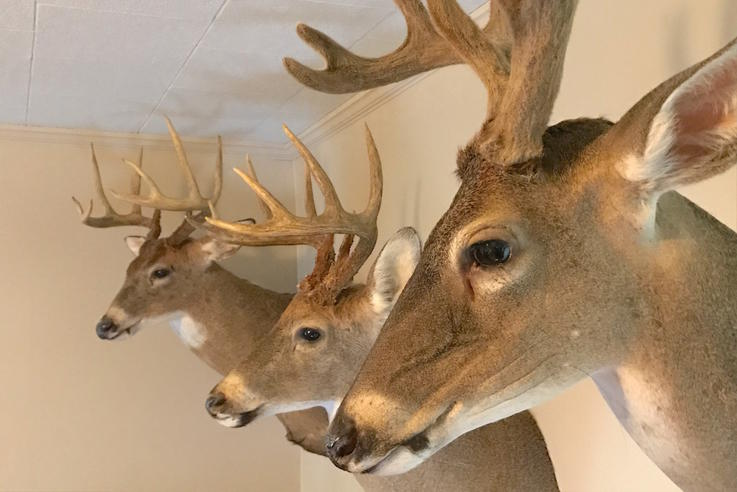 Deer Head Mount >> 7 Different Deer Taxidermy Options And Their Costs Realtree Camo
