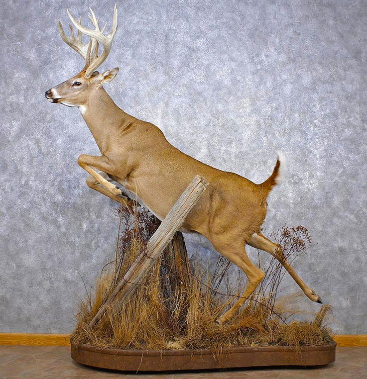Deer Head Mount >> 7 Different Deer Taxidermy Options And Their Costs