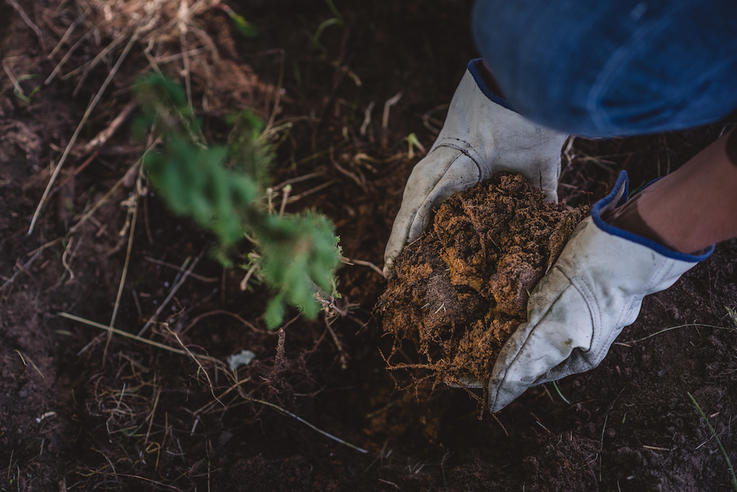 You Don't Consider Soil Composition