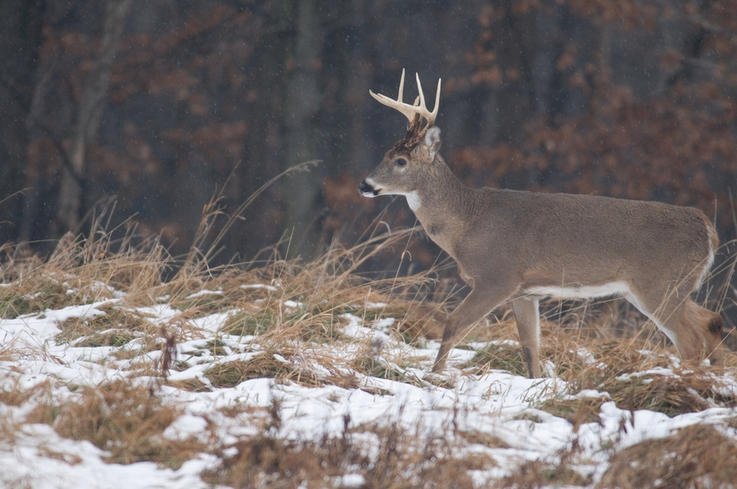 One Positioned According to Deer Travel Routes and Entry/Exit Routes