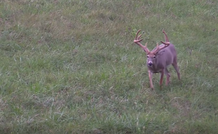 But Never Trust Solely Your Trail Cameras