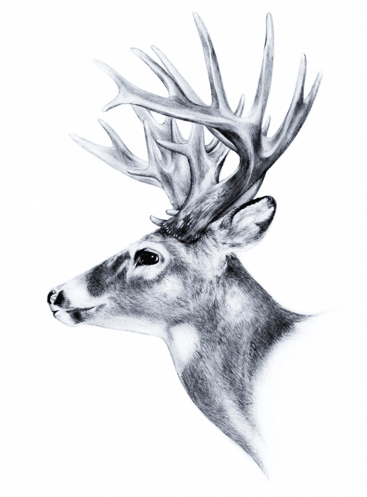 Want to See More Record Deer Data?
