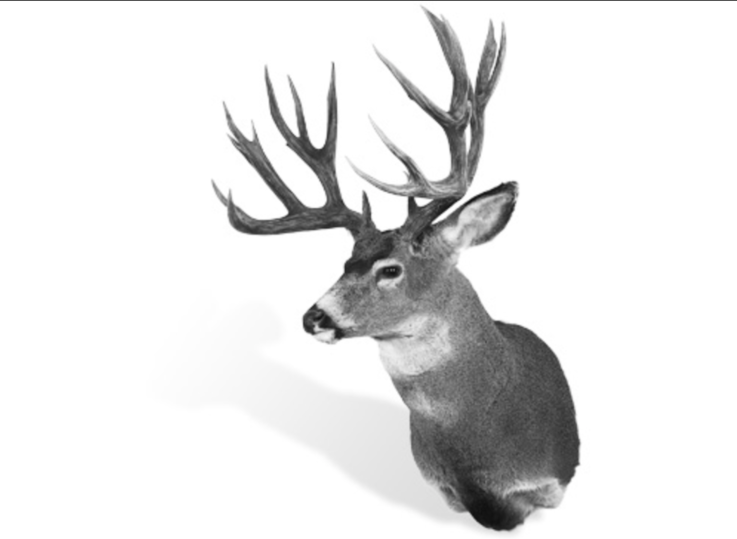 The Record Non-Typical Columbia Blacktail Deer