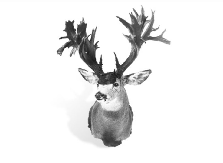 The Record Non-Typical Mule Deer