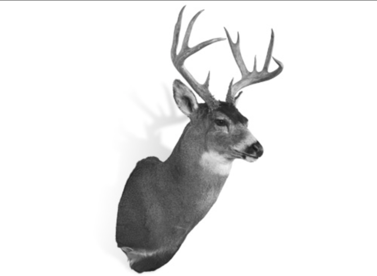 The Record Non-Typical Sitka Blacktail