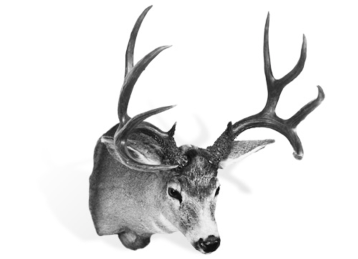 The Record Typical Columbia Blacktail Deer