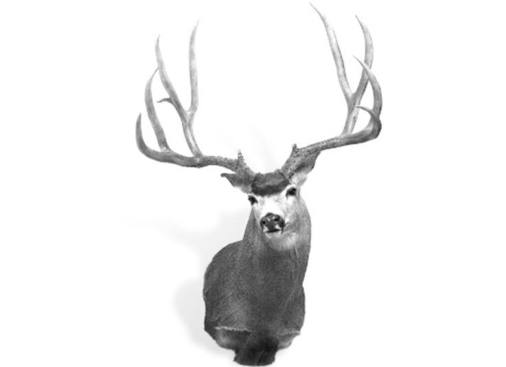 The Record Typical Mule Deer