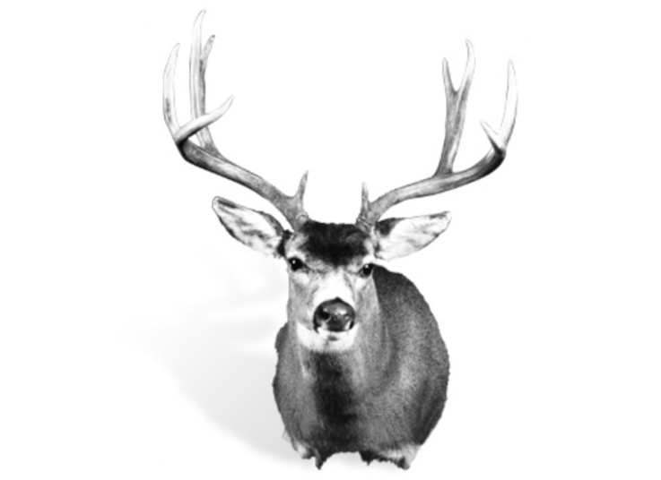 The Record Typical Sitka Blacktail