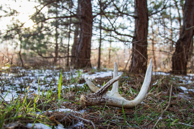 Myth: Bedding Areas Are the Only Places to Find Sheds