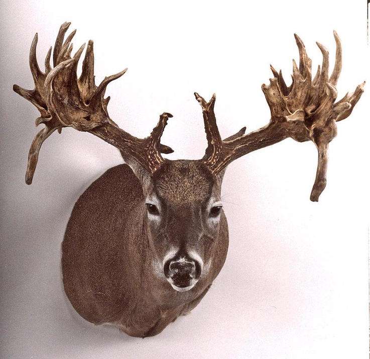 The Fulton Buck