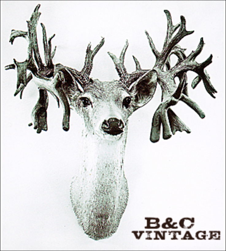 The Texas Buck