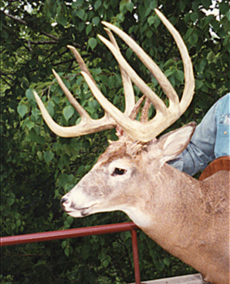 The Petry Buck