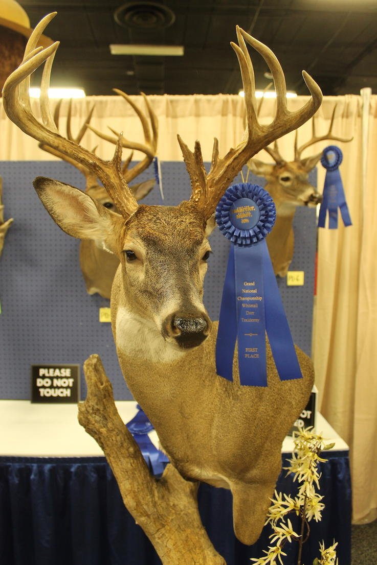 MASTERS DIVISION BEST OF SHOW