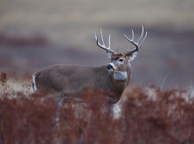 A Target Buck Hasn't Revealed Itself