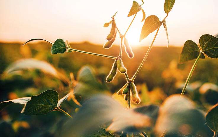 Plant a Legume So Nitrogen Isn't as Much of an Issue