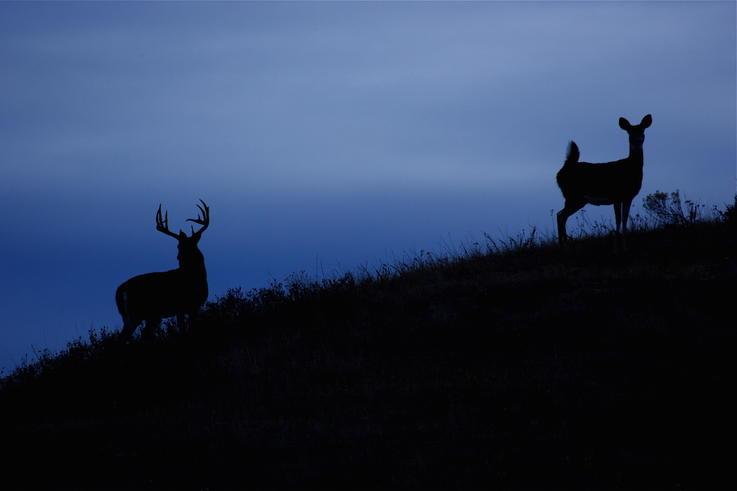 Fawns Are Alone