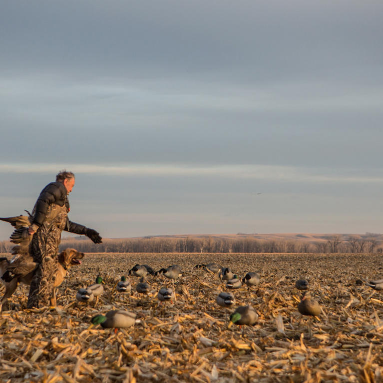 Do: Look for Woodies in Cut Ag Fields