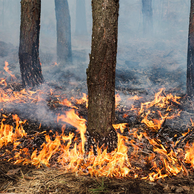 Using Prescribed Fire