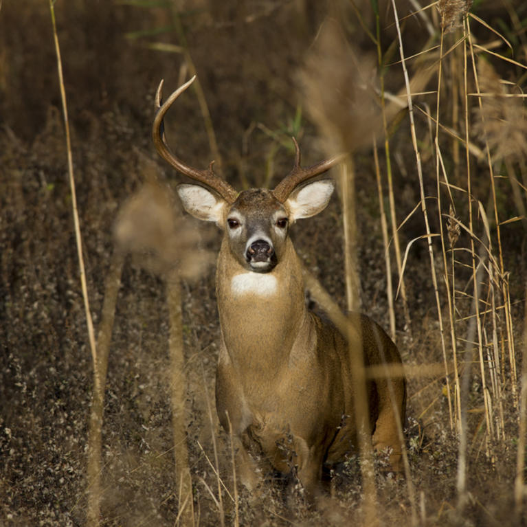 The Cheapest States for Non-Resident Deer Hunting This Season
